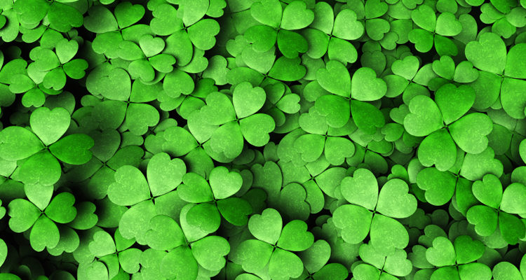Bonus verde e i nuovi incentivi green